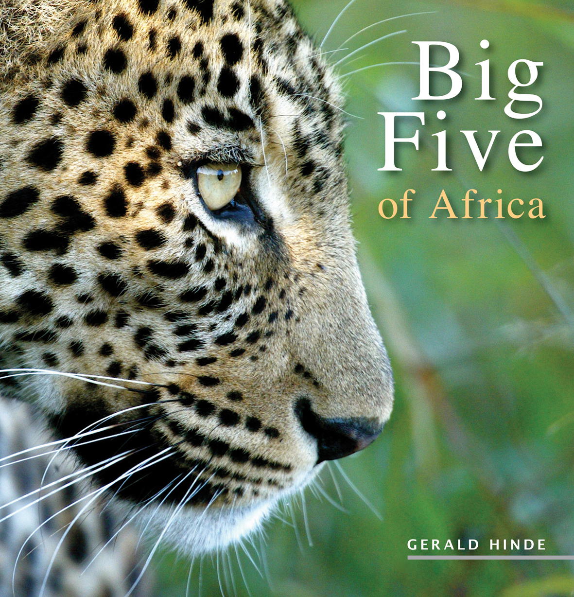 Big Five of Africa