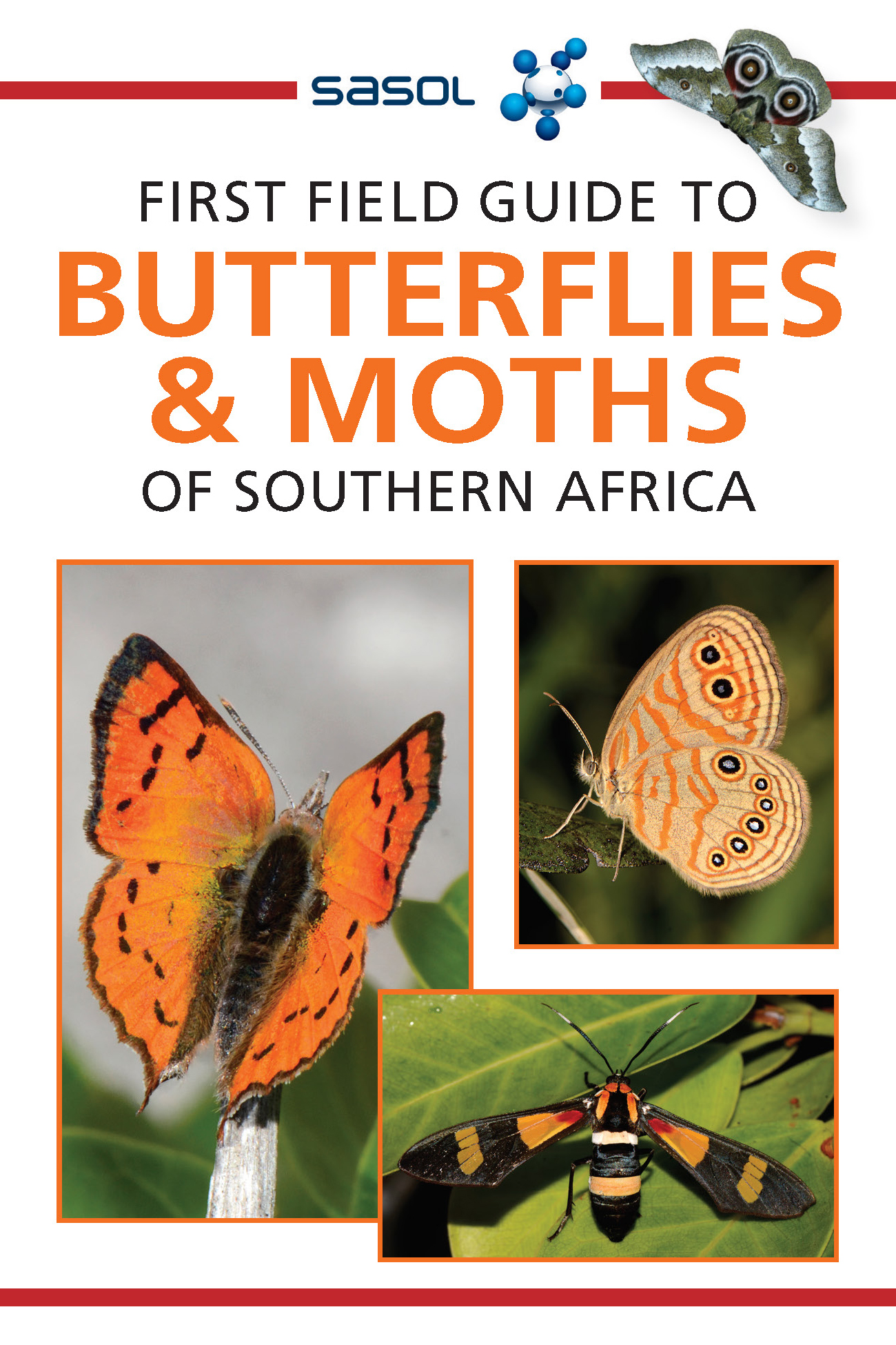 First Field Guide to Butterflies & Moths of SA (NE)