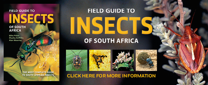 Field Guide to Insects of South Africa