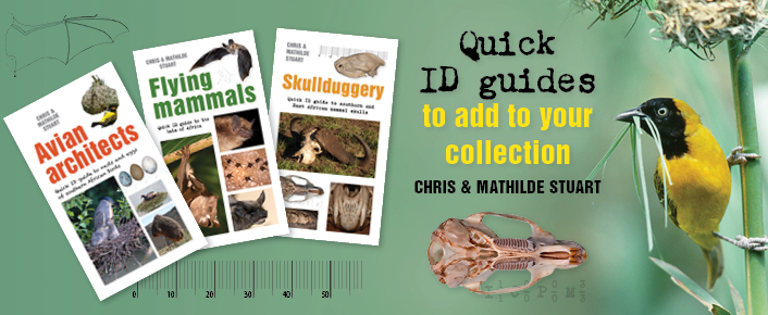 Quick ID Guides