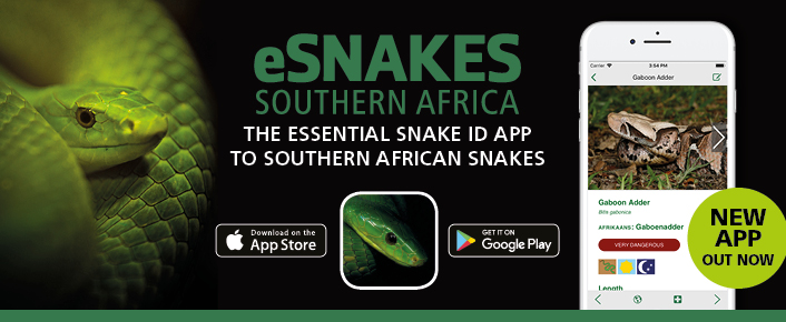 eSnakes Southern Africa